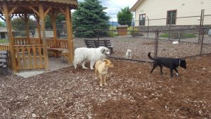 Humane Soceity of Northwest Montana - Roundup for Safety Grant Award Safeguards Lives