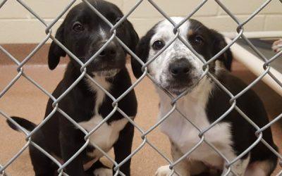 Humane Society Debuts Homeless Puppies at Petco
