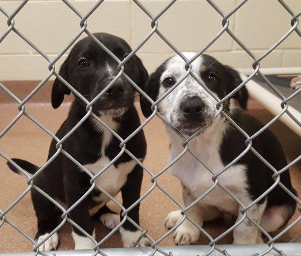 Humane Society Debuts Homeless Puppies At Petco Humane Society Pets